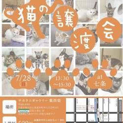 猫の譲渡会@京都サカタニギャラリー