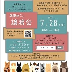 藤井寺 保護猫譲渡会