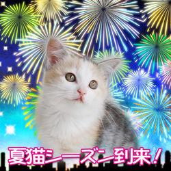 猫の里親会 in 小田原