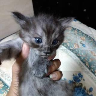 野良猫が産んだ3兄弟