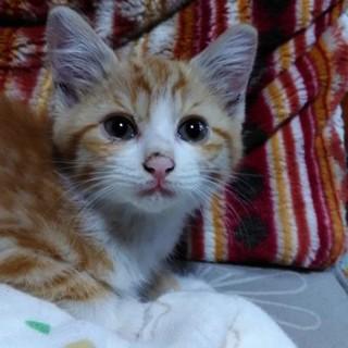 2ヶ月の可愛い盛りの子猫です。や