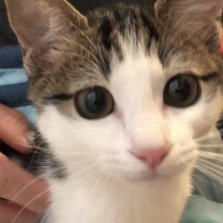 実は三毛猫☆愛嬌たっぷり美人猫ララ