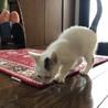 神社の子猫  男の子 サムネイル4