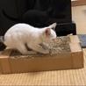 神社の子猫  男の子 サムネイル5