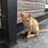 ちゃとらの子猫 サムネイル6