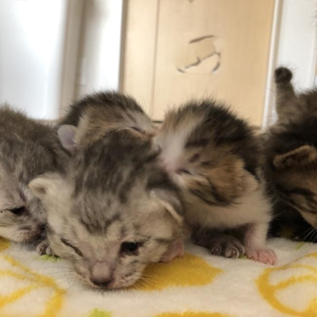 猫吉五郎のカバー写真