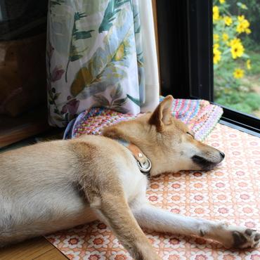 本日のミナレさん。お庭が見えるところで昼寝するのが好きです。