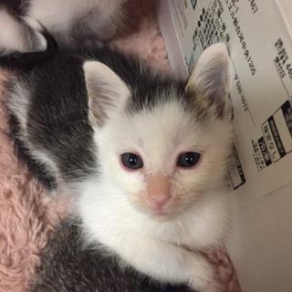 保護猫ちゃんの里親様を探しています。