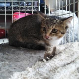 3ヶ月の女の子の子猫
