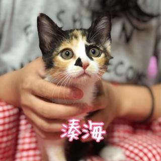 個性派美人三毛猫【湊海】