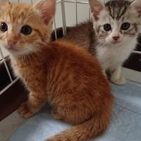 道端にいた子猫兄弟