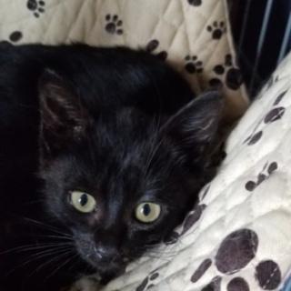 可愛い黒猫の赤ちゃん兄妹(ФωФ)