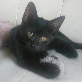 毛並みつやつや!人懐っこい黒猫の男の子。