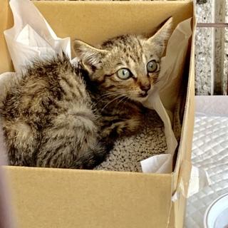 子猫保護しました オス 2ヶ月