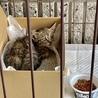 子猫保護しました オス 2ヶ月 サムネイル2