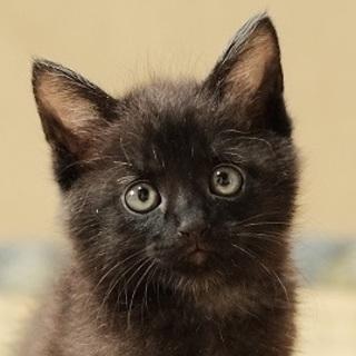 甘えたいにゃ☆黒猫ベアくん