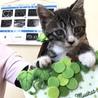 静岡県から子猫の里親さん募集です!