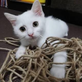 【推定3ヶ月】保護猫くんです