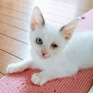 可愛い人馴れヨーダちゃん♡