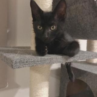 黒猫生後2ヶ月♂