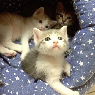 とても懐っこい美猫兄妹と三毛ママ