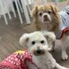 保護犬カフェ®立川店(保護活動者)