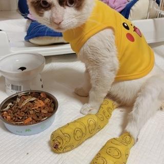 保護猫 シャムミックス  元気な男の子