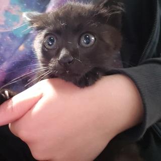 少し臆病なエンジェルマーク付き黒猫ちゃん♀