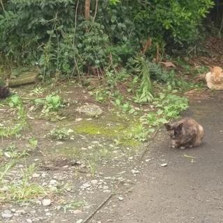 野良猫達の暖かいおうちを探しております。