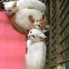 生後2ヶ月くらいの子猫、譲渡されました。