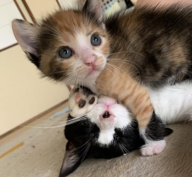 里親 猫 石川 県 石川県/犬猫の譲渡(里親募集)について