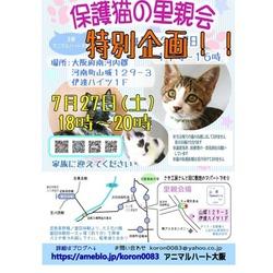 保護猫の里親会  特別企画