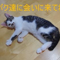 猫の譲渡会in長崎市 浜町アーケード好文堂さん