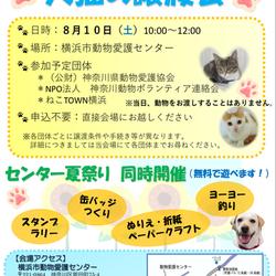 犬猫の譲渡会 in横浜市動物愛護センター