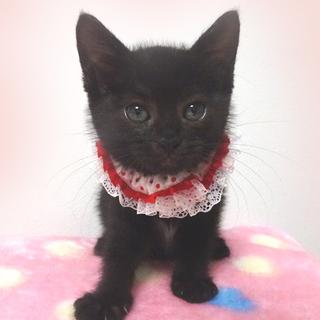 可愛い黒猫☆美黒(みく)ちゃん 1ヵ月半