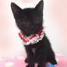 可愛い黒猫☆美黒(みく)ちゃん 1ヵ月半 サムネイル2