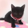 可愛い黒猫☆美黒(みく)ちゃん 1ヵ月半 サムネイル3