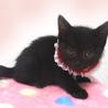 可愛い黒猫☆美黒(みく)ちゃん 1ヵ月半 サムネイル4