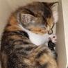 生後約3ヶ月の元気な猫ちゃん♥️
