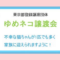 ゆめネコ譲渡会☆参加猫募集! サムネイル2