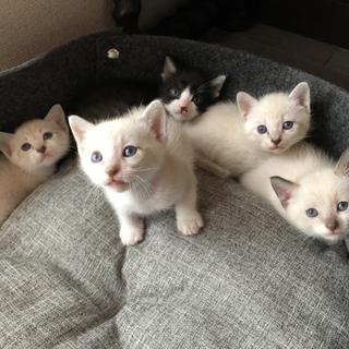 可愛いすぎる子猫たち【生後1ヶ月】5匹