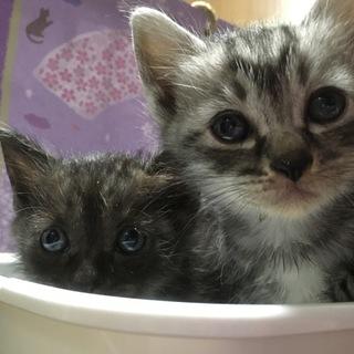 子猫2匹でお迎えよろしくお願いします。