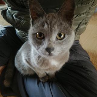 小豆島より、保護猫の里親さん募集!