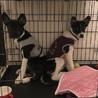 4ヶ月齢中型〜大型犬♀ サムネイル4