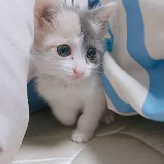 生後4ヶ月のメス猫ちゃん