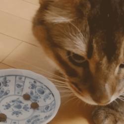 うちのソマリと療法食(サニメドリーナル)