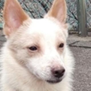 保護犬ナンバーD1321 ミックス犬