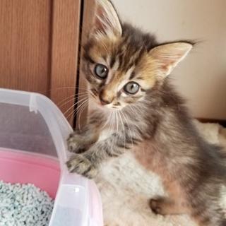 家で産ませた子猫です③『れん(仮名)』