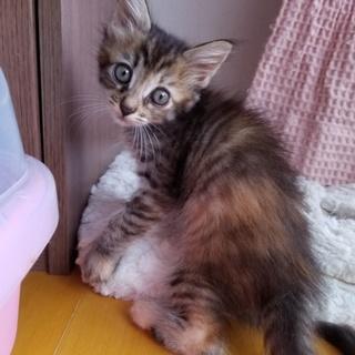 家で産ませた子猫です②『りん(仮名)』