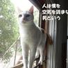 【動画あり】鳴き声が面白い☆ サムネイル2